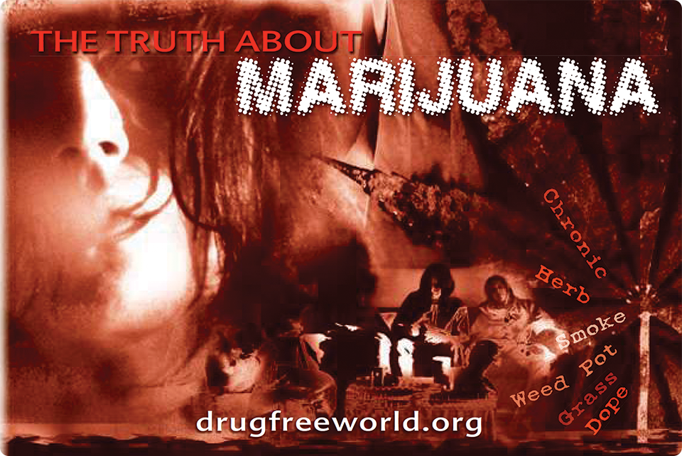 The Truth About Marijuana Booklet