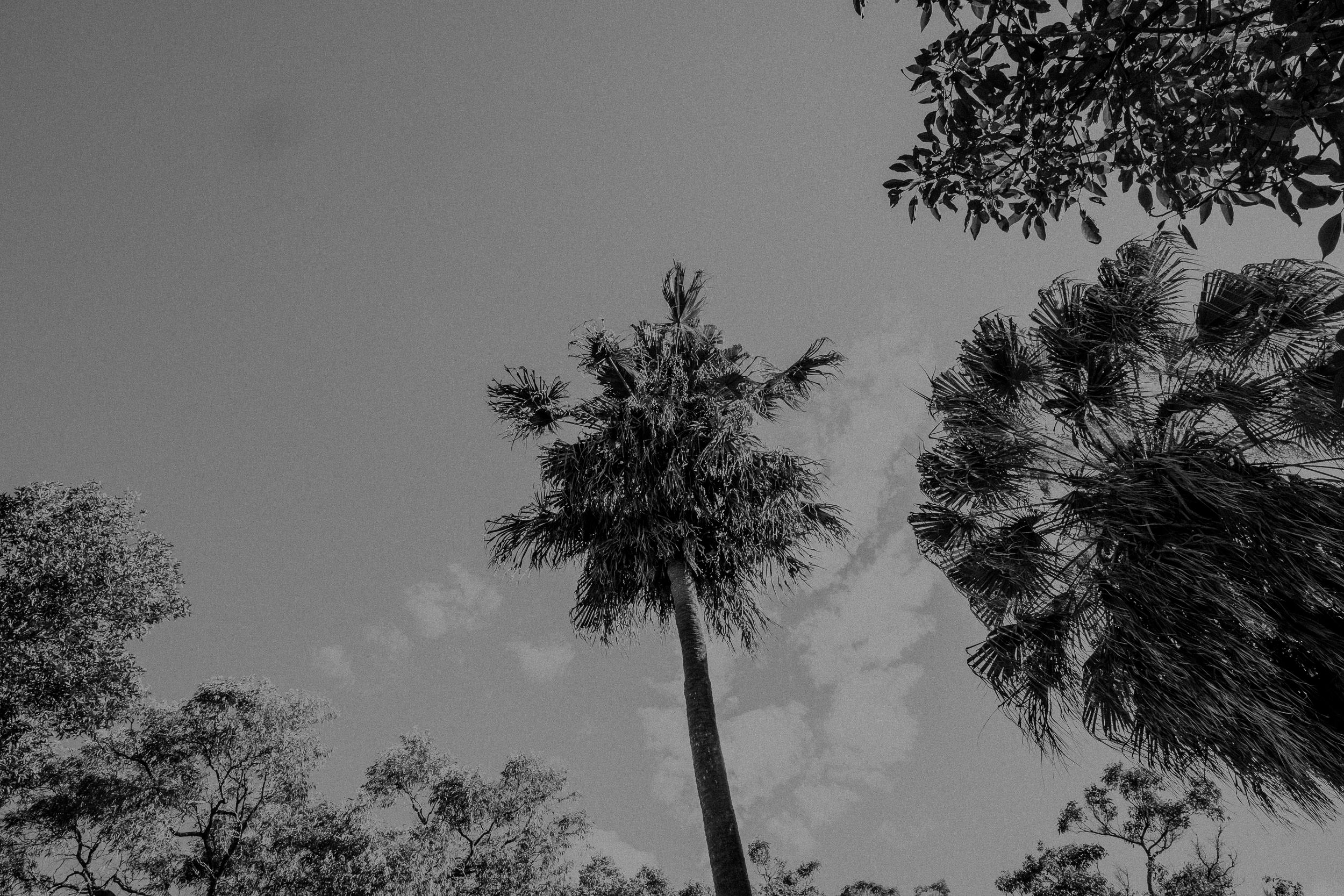 S&A Elopement - Kings & Thieves - Shred 'Til Dead - Central Coast Beach Forest Wedding - 41.jpg