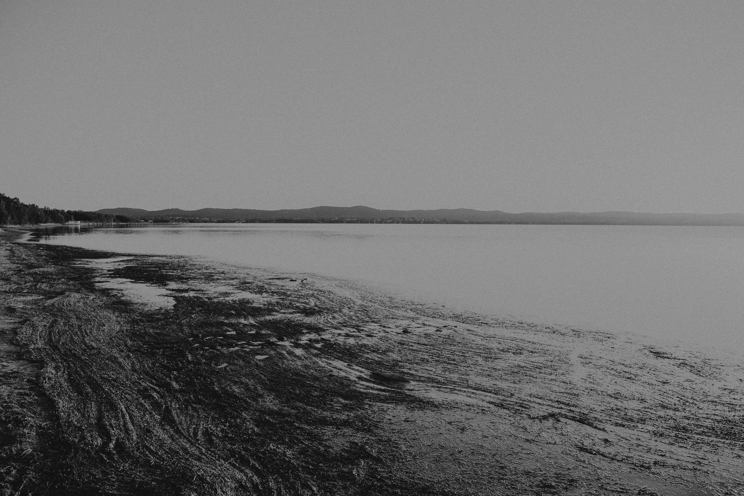 S&A Elopement - Kings & Thieves - Shred 'Til Dead - Central Coast Beach Forest Wedding - 367.jpg