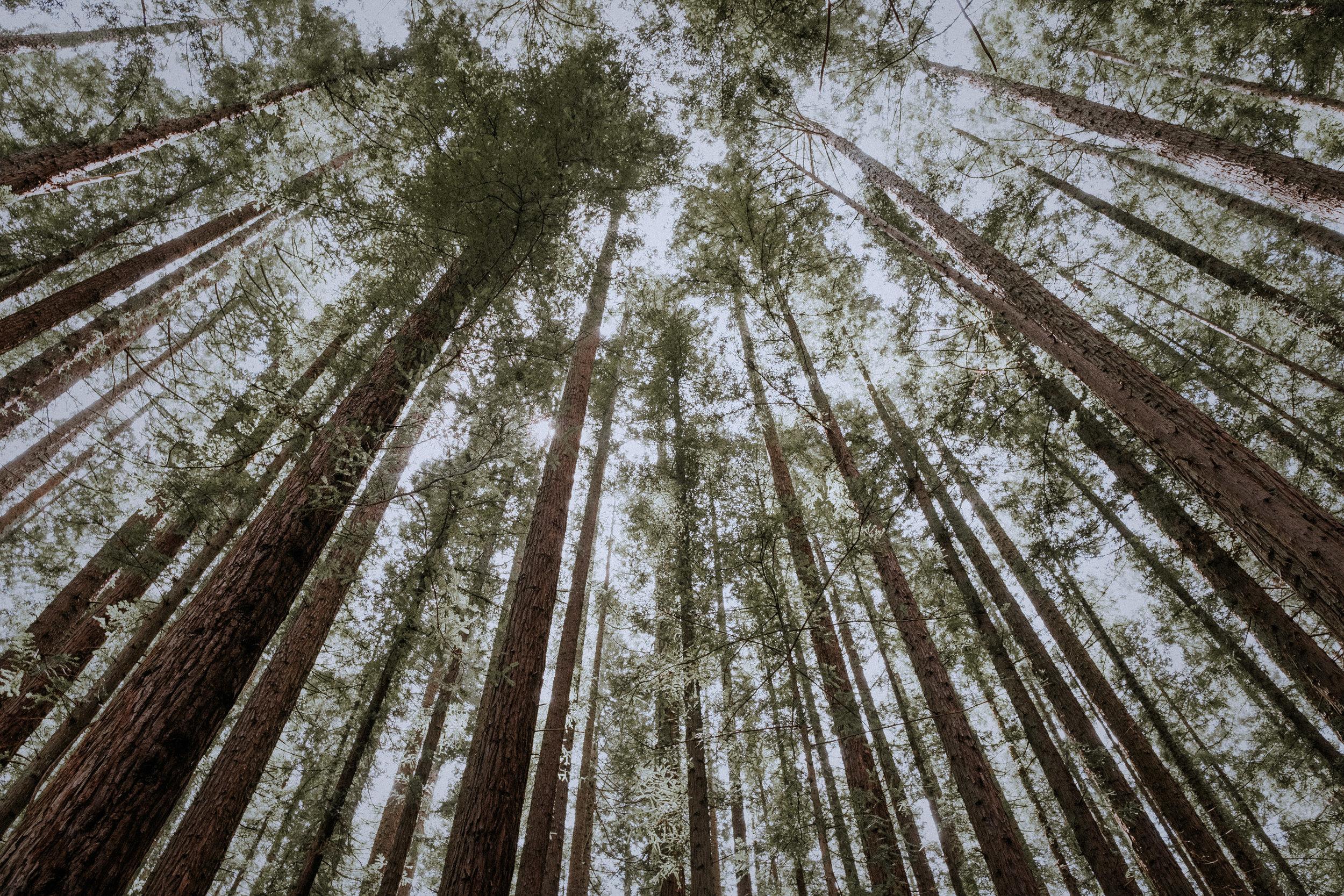 WARBURTON REDWOOD FOREST, VICTORIA - ~ spring ~