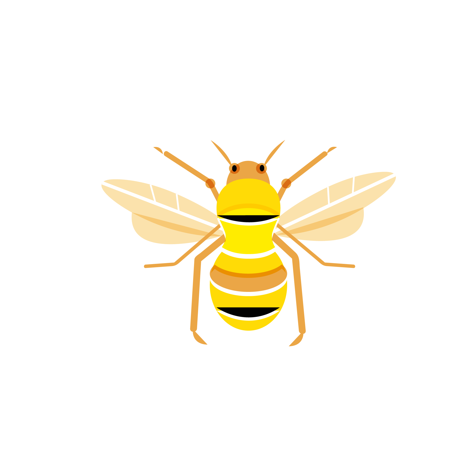 Bee_emelinebarrea_copyright.png
