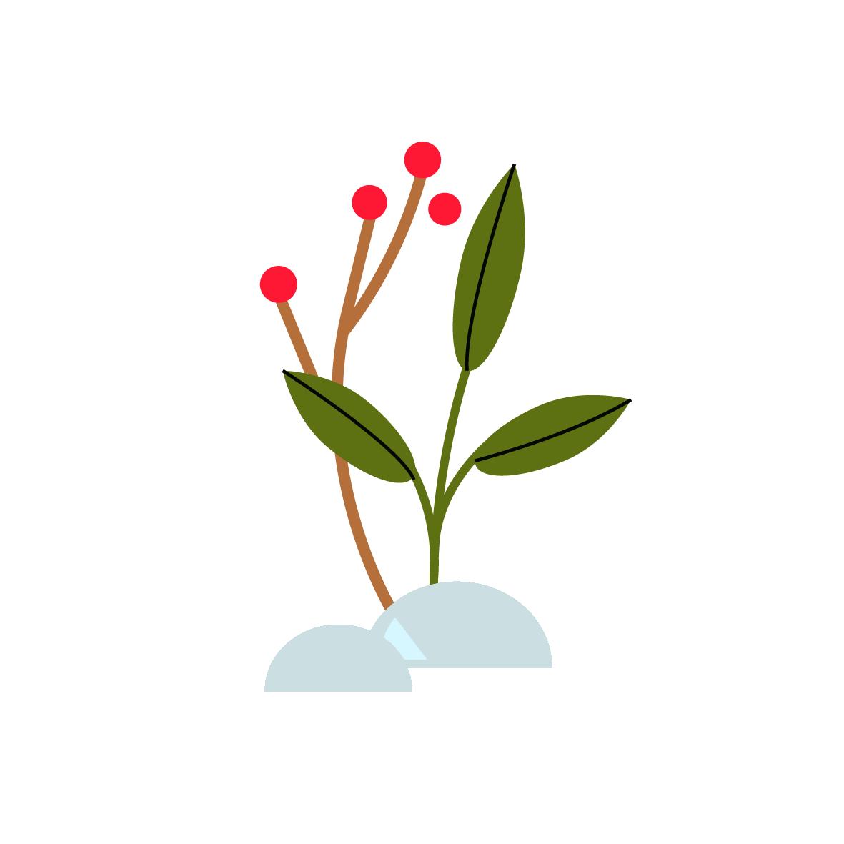 Winter plants - Vector Illustration © Emeline Barrea, All rights reserved