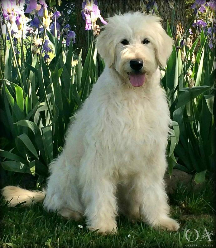 Meet Blondie! -