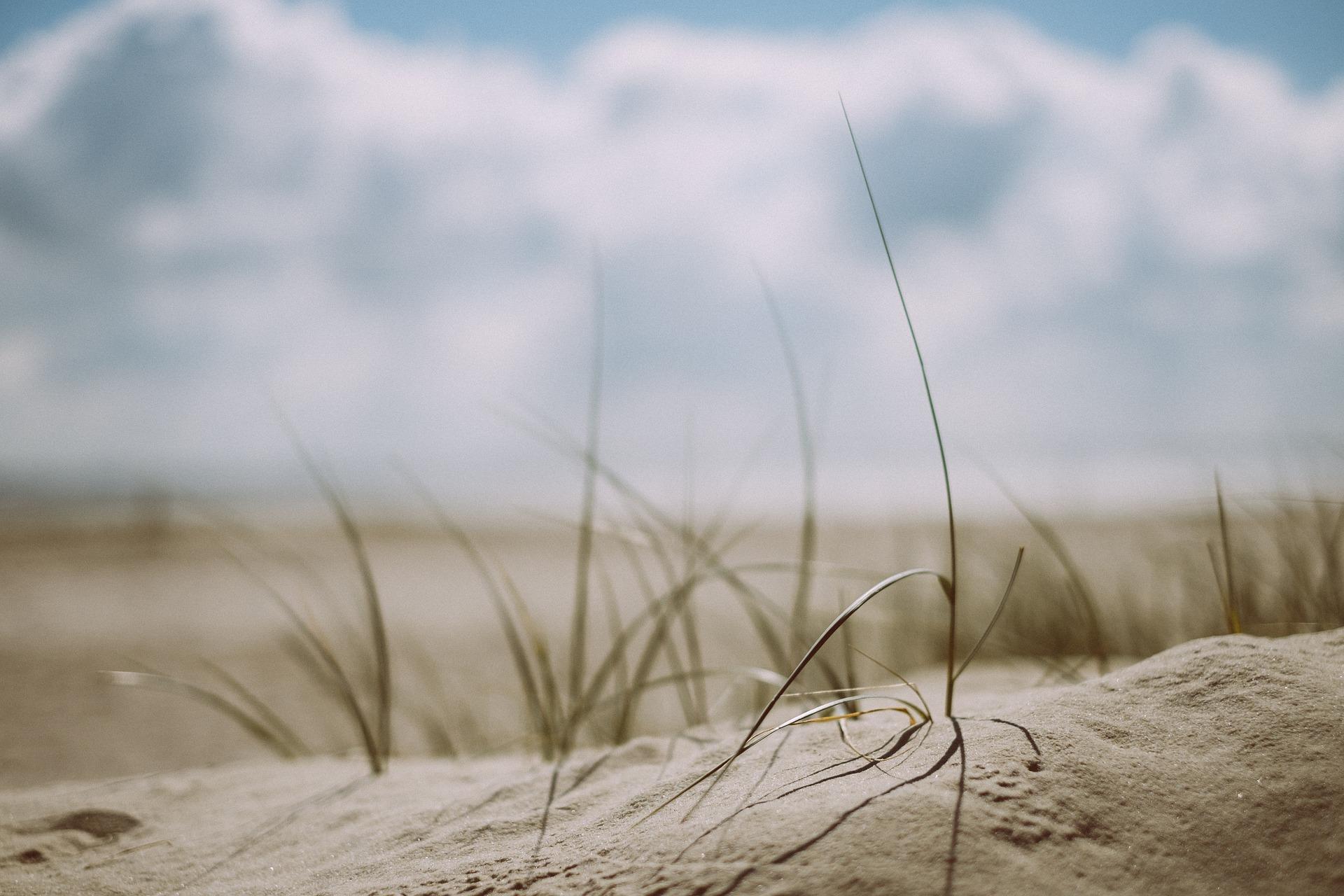 beach-1866823_1920.jpg
