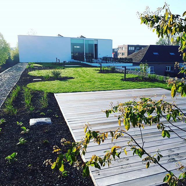 Daktuin te Roeselare #optigrün #daktuin #details #belgianarchitecture #naturoofgroendaken #deochtendstondheeftgoudindemond