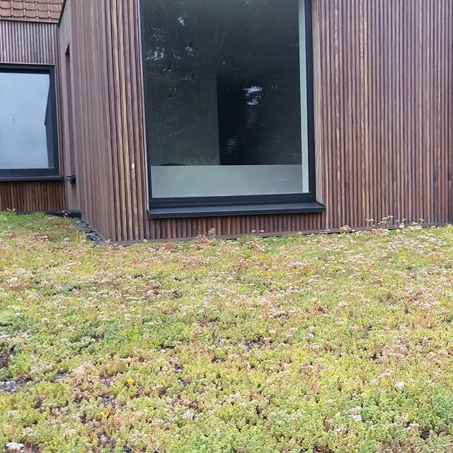 #groendak #roeselare #greenroofasitshouldbe #9maandnaplaatsing #architecture #sedum #optigrün #optigroen