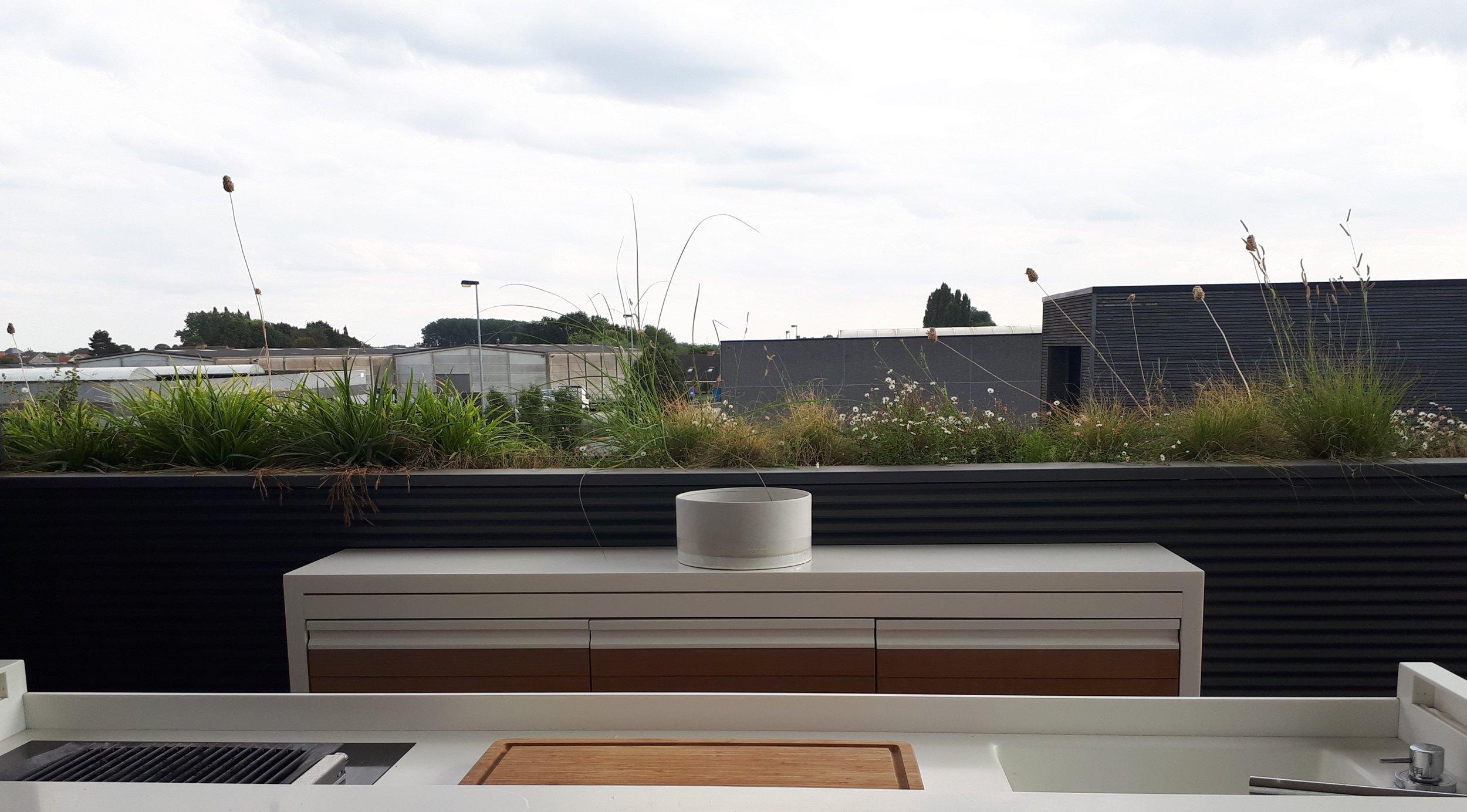 groen op daken.jpg