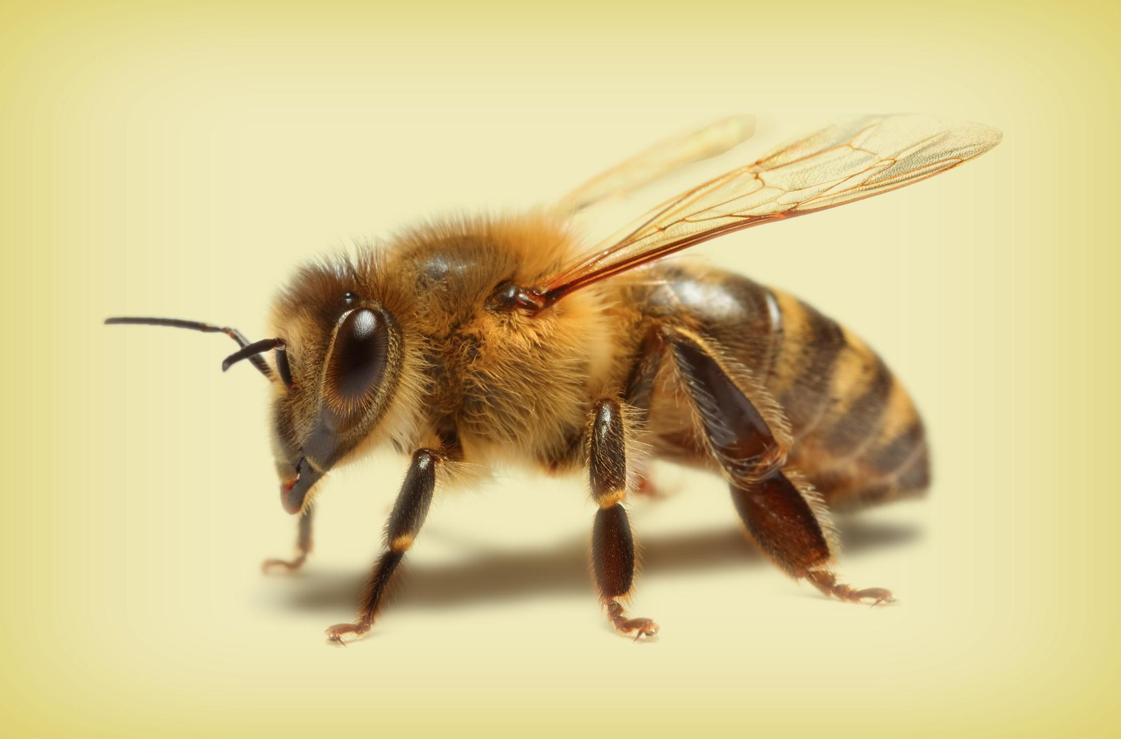 BeeHoney.jpg