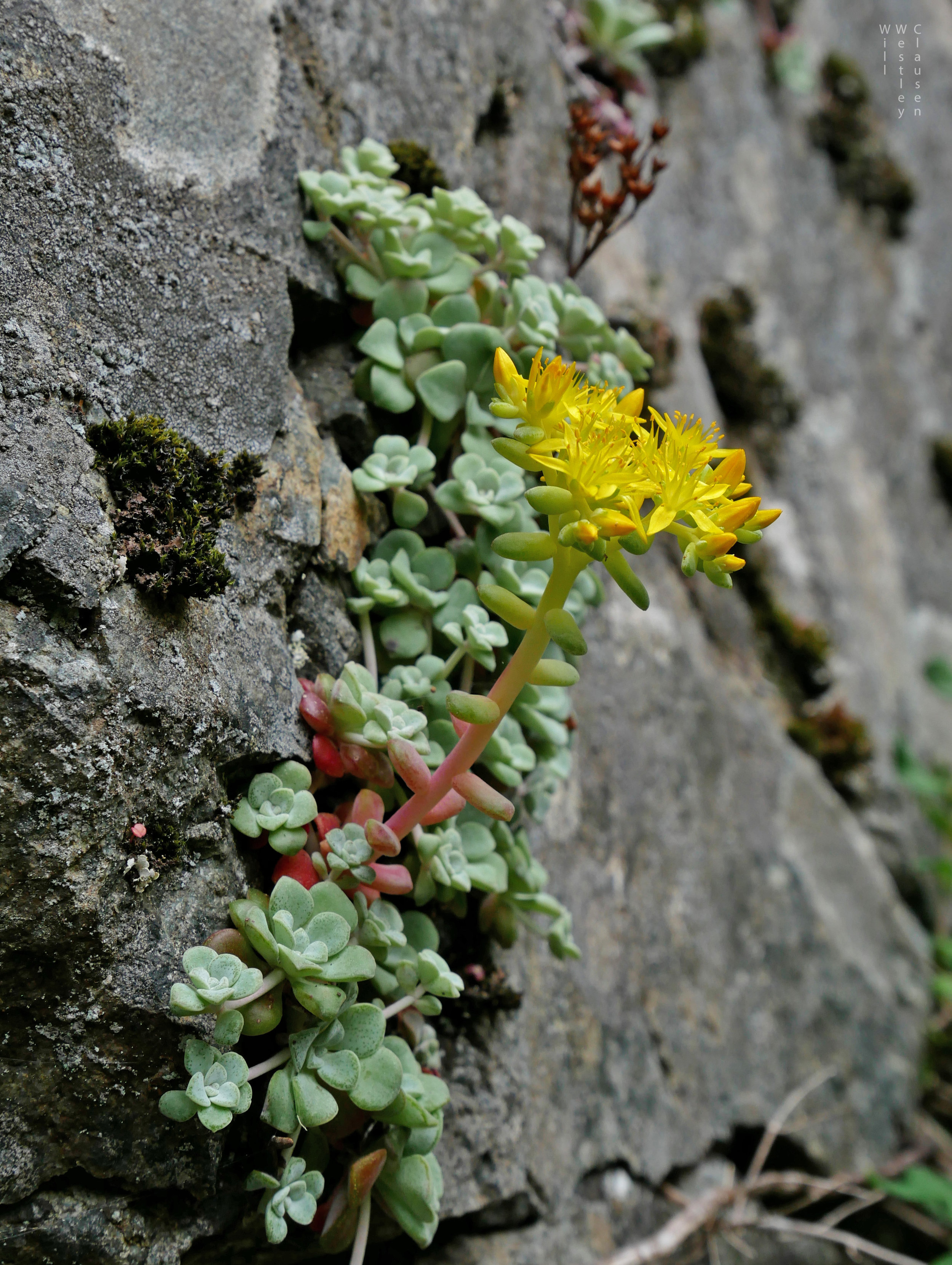 Growing From A Narrow Crevice