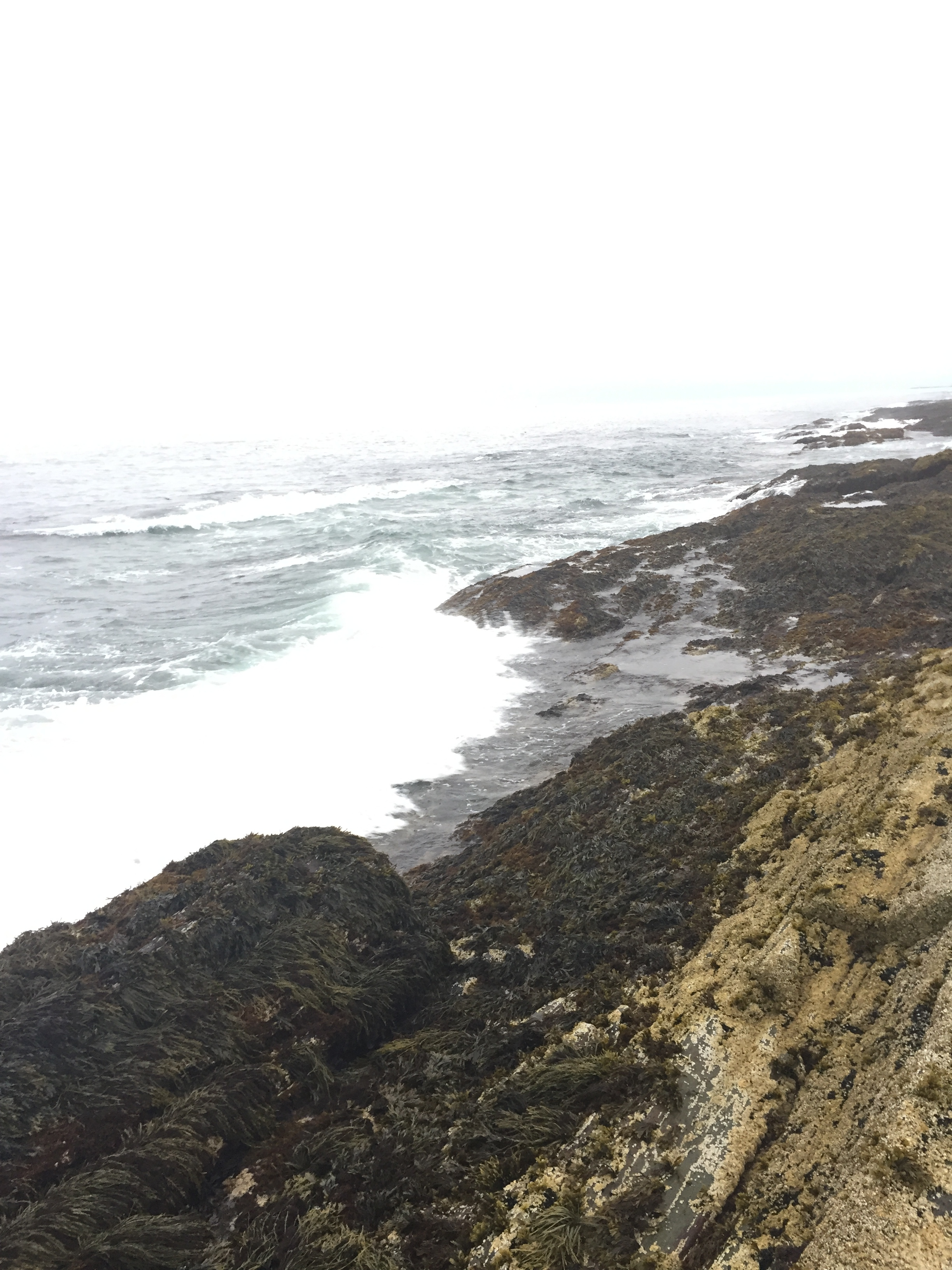 Between the known and the unknown on the Maine coast