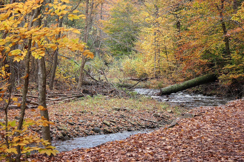 creek_photo.jpg