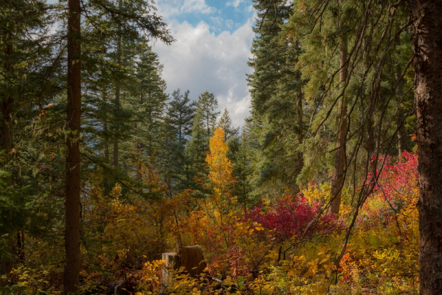 Forest In Fall - LR.jpg