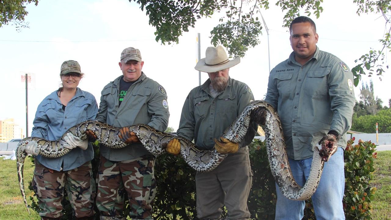 pythons.jpg