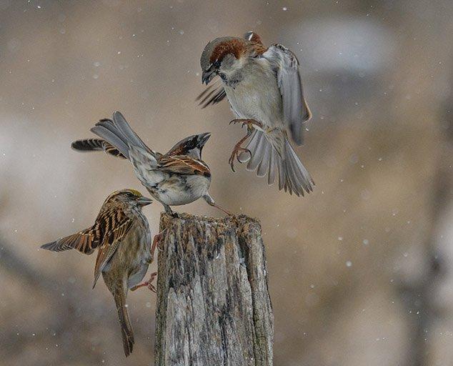Attack-of-the-Birds-by-Charlene-Weber-634x512.jpg