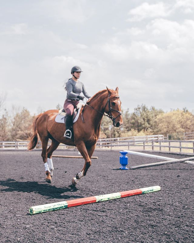 Getting over #humpday like 🚀 Lex and I had accomplished a thing this past Monday- we jumped a 3ft oxer 🐴 This many not be very high for some, my goodness it is a milestone for me in my confidence. My eyes are set on 3ft jumpers next year 🤩 but we shall see!  What's the highest you've and your pony have jumped? 🚀