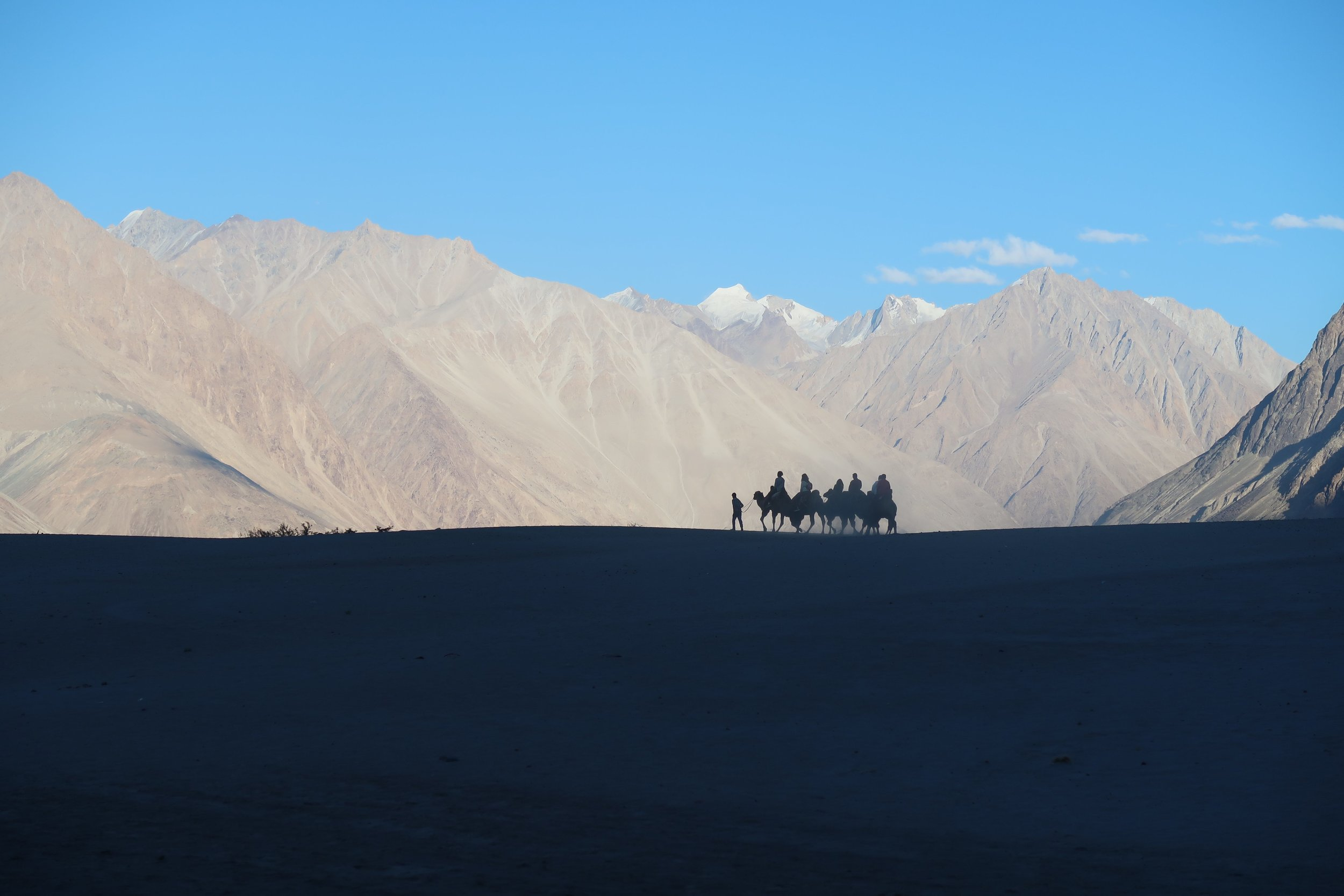 Ride a Bactrian camel over the sand dunes in Hunder - Nubra Valley in India