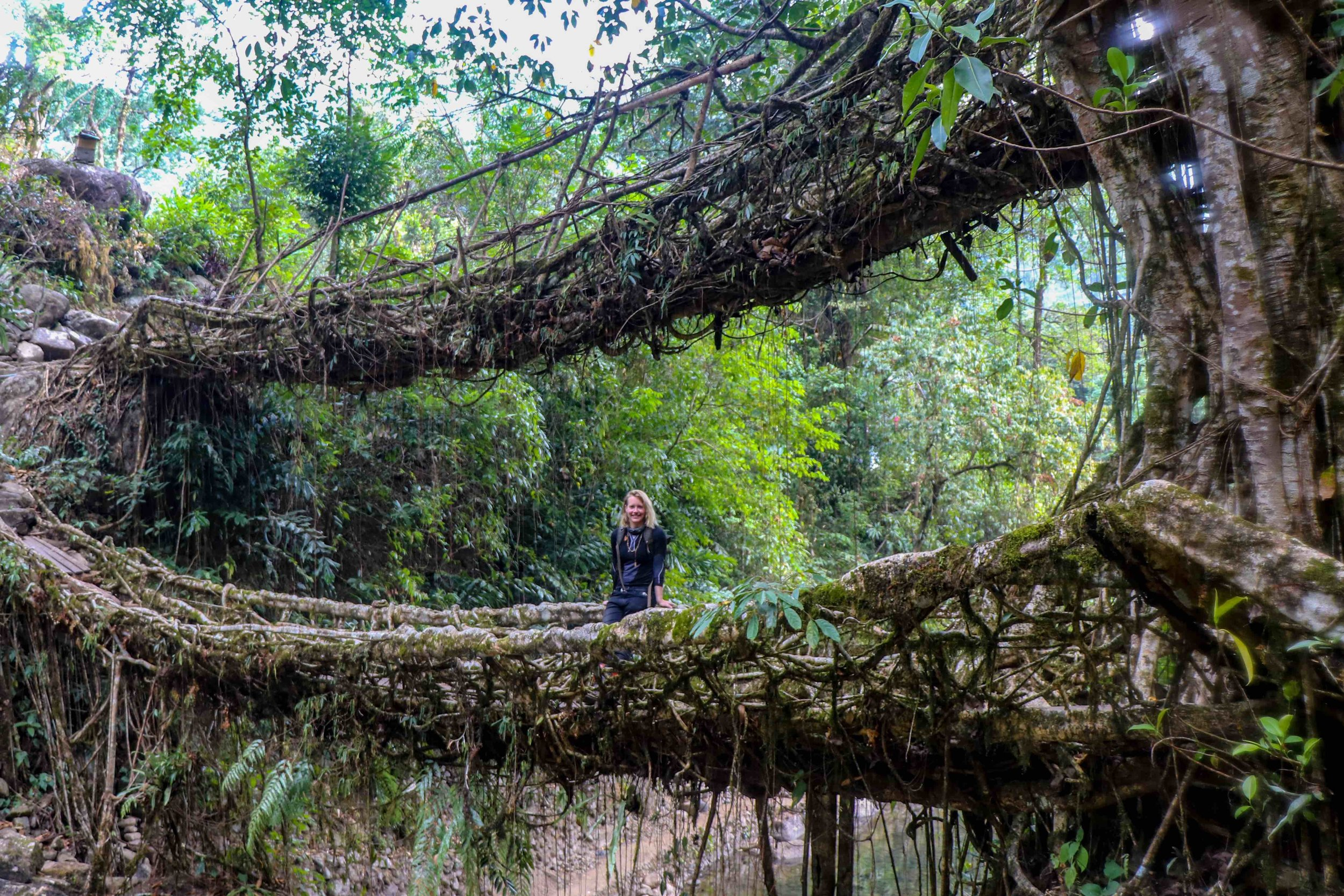 Double Decker Living Root Bridge in Cherrapunjee, India - Meghalaya, North Eastern States.