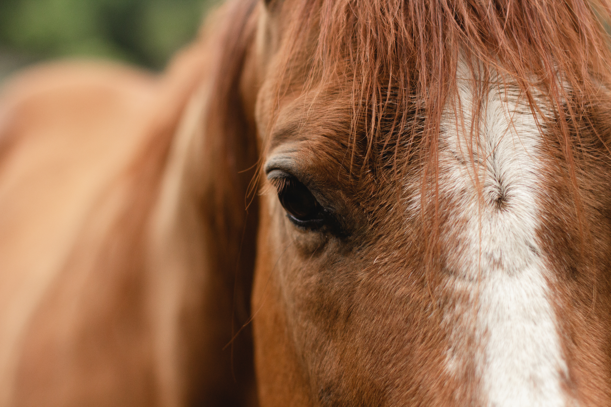 Ride your perfect horse at Greenhorn Ranch