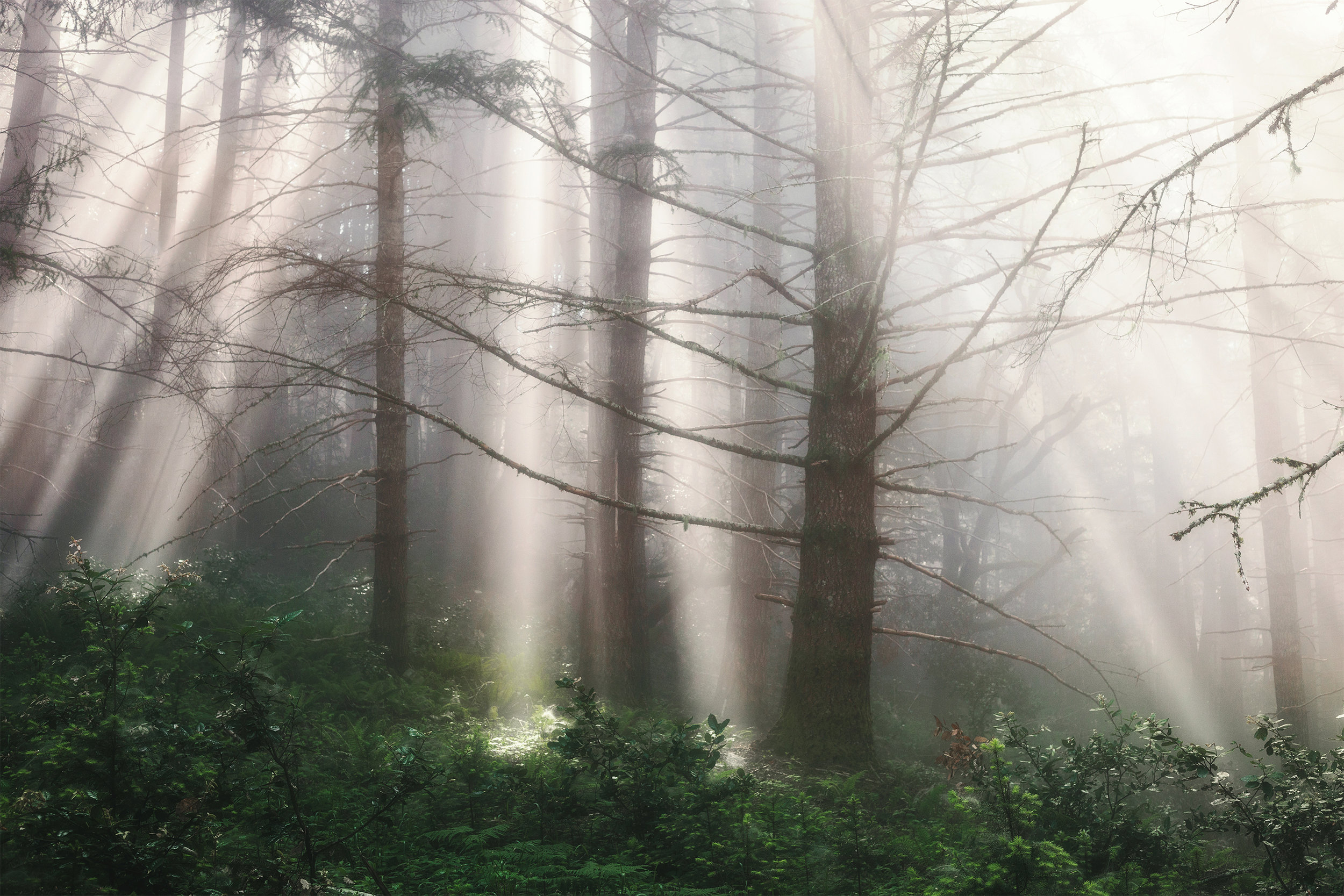 Forests of the Pacific Northwest
