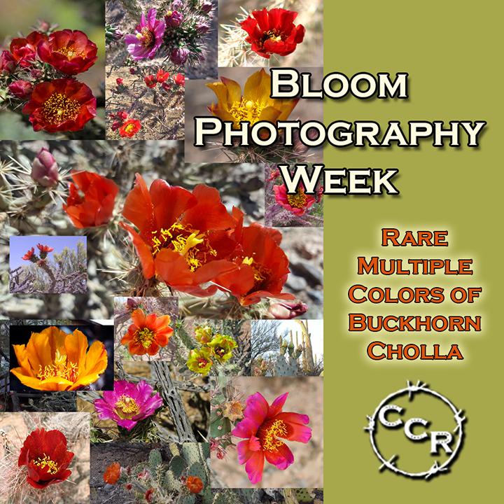 buckhorn photography week.png