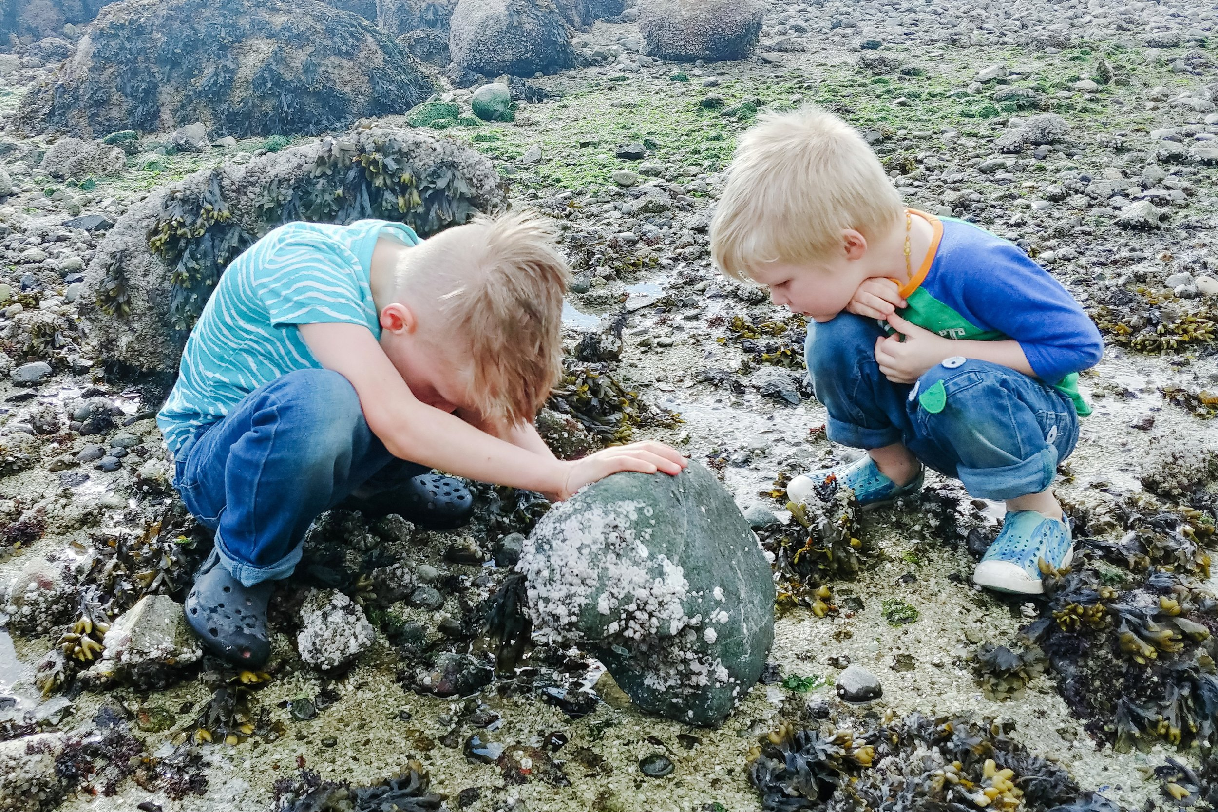 Tide Pooling in British Columbia