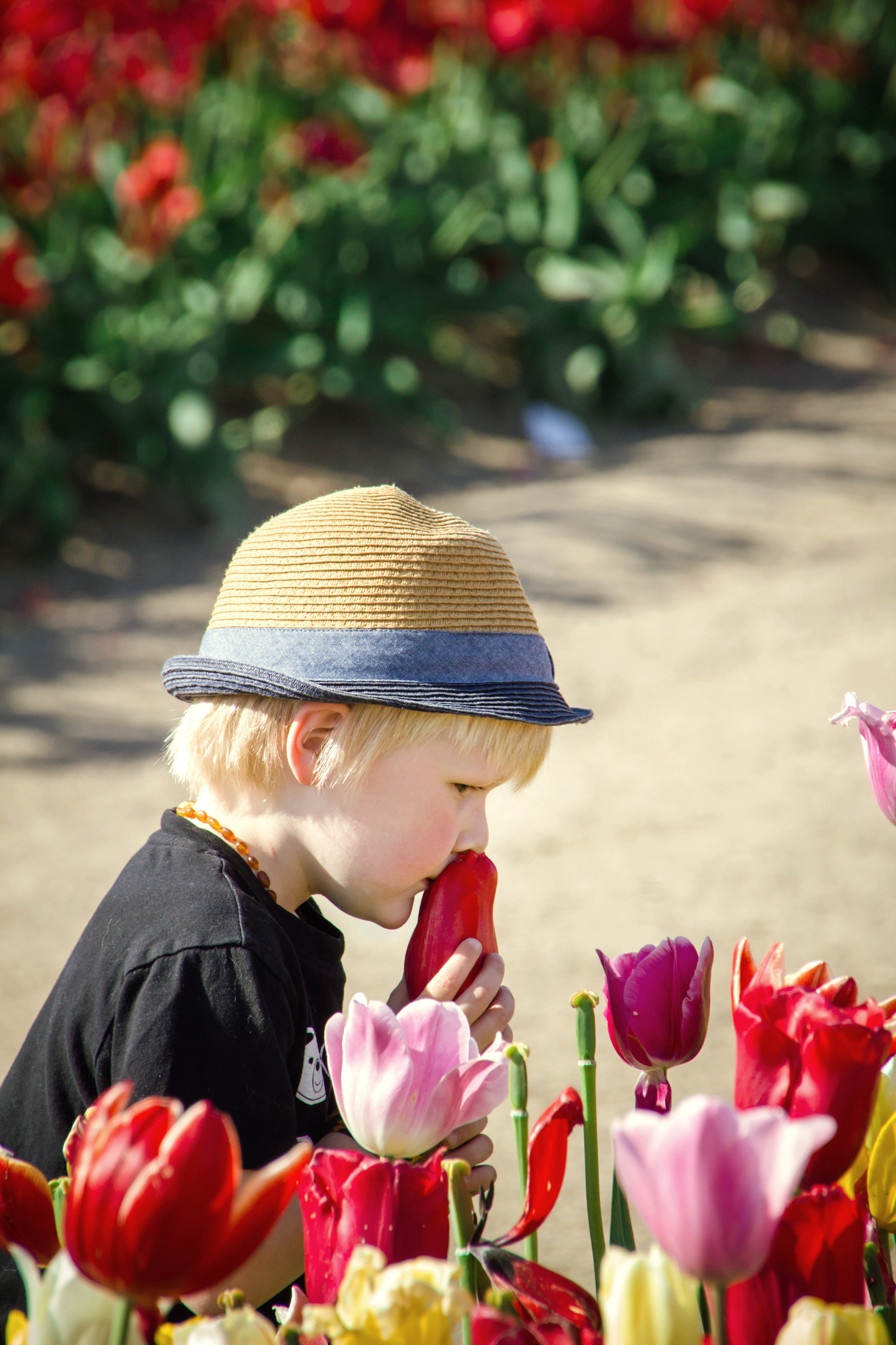 Tulip Festival Photo Ops, Abbotsford BC