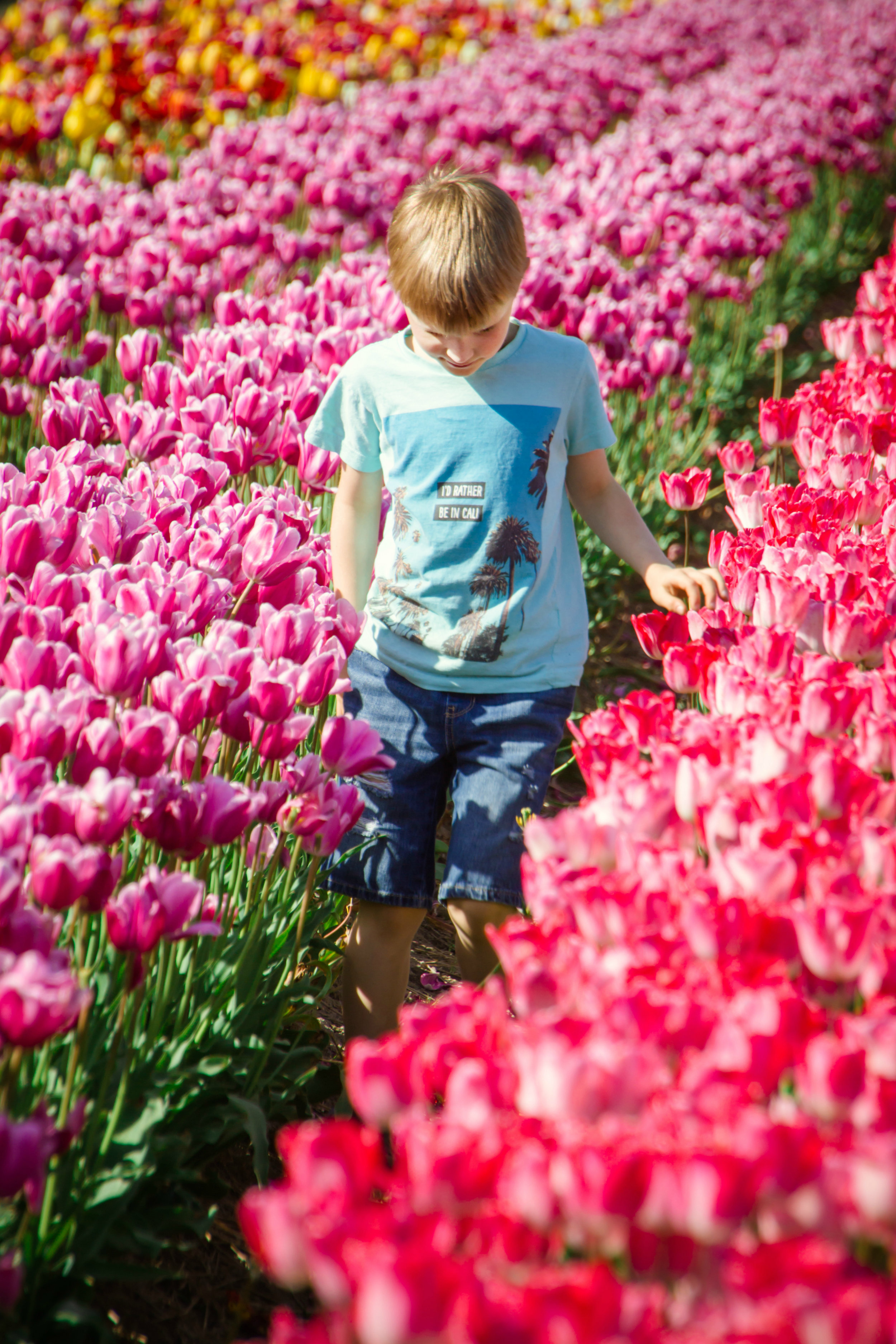 Bloom, The Abbotsford Tulip Festival,, Locally Obsessed,