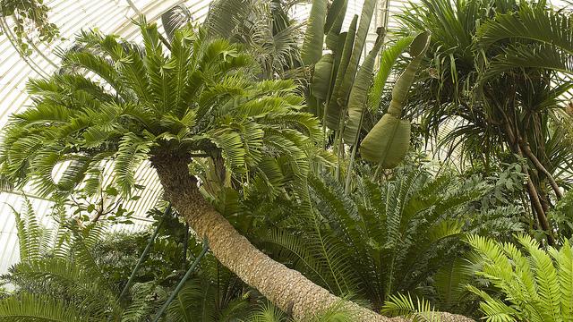 - Photo credit: Kew on Flickr on Visualhunt.com /  CC BY-NC-SA