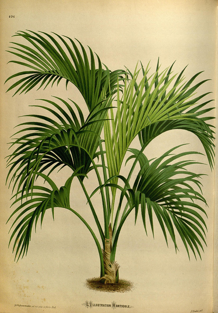 - Photo credit: BioDivLibrary on Visual hunt /  CC BY