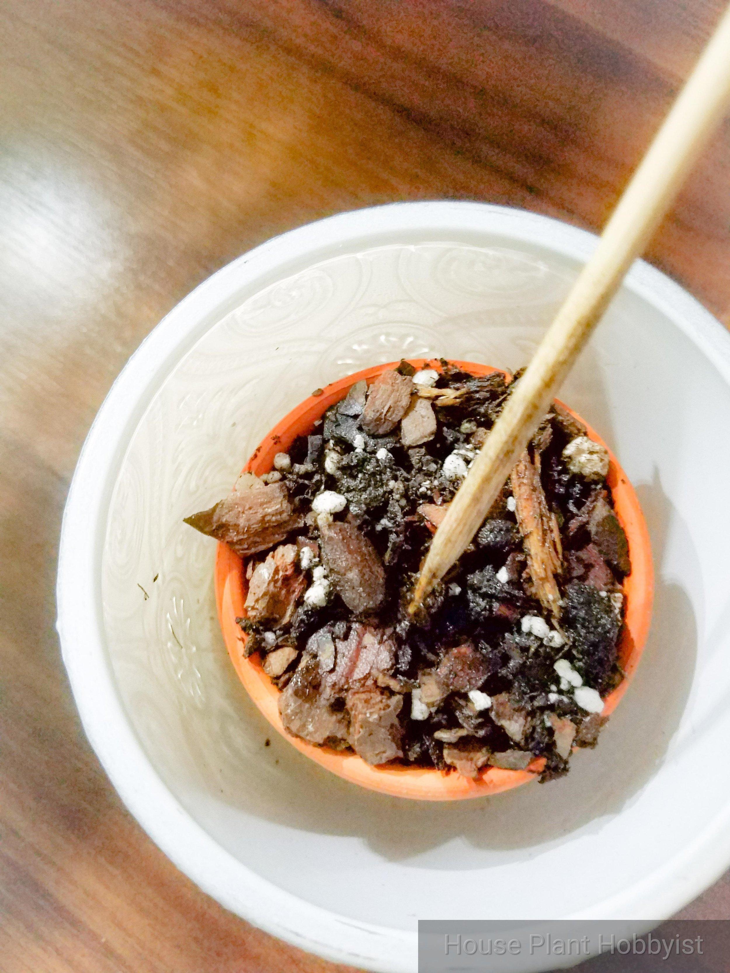 Pot with skewer.jpg