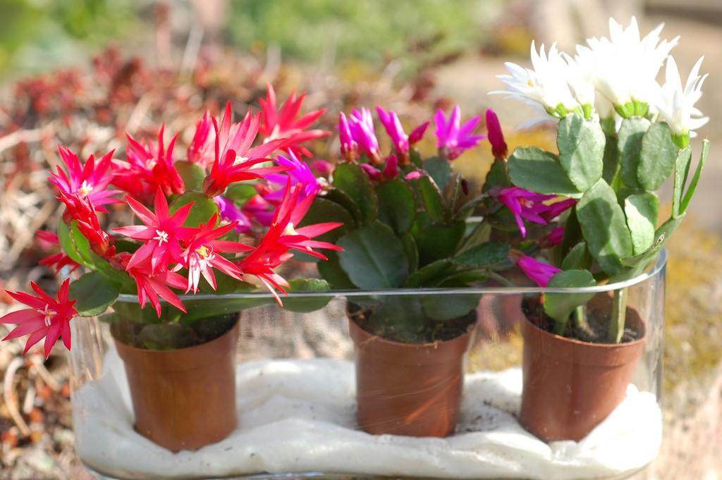 Easter Cactus4.jpg