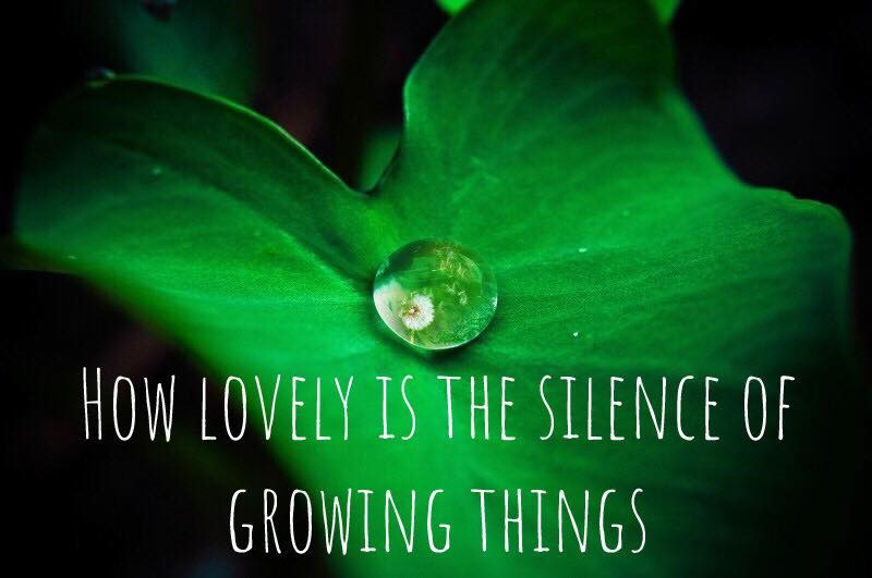 How lovely is the silence of growing things quote.jpg