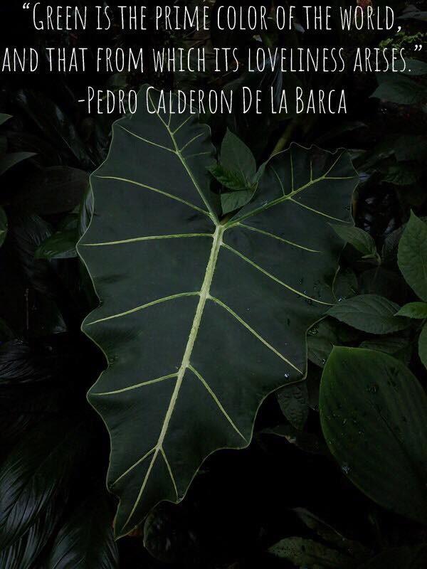 Pedro Calderon De Le Barca quote.jpg