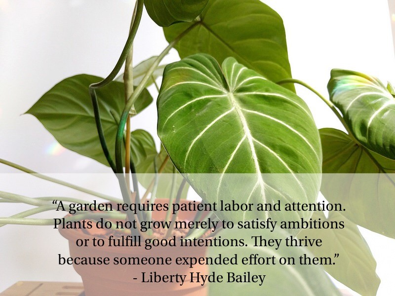 Liberty Hyde Bailey quote.jpeg