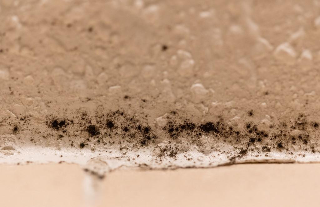 black mold.jpg