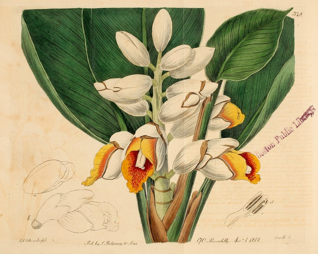 Library Botanical Plate.jpg