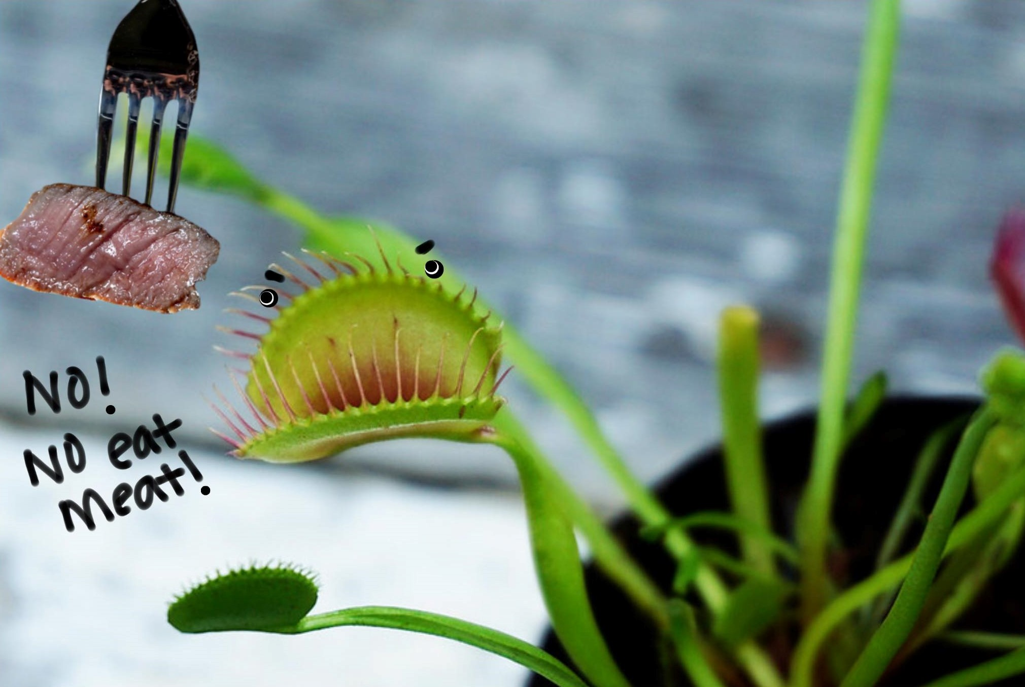 Fact or Fiction no meat for carnivorous plants.jpg