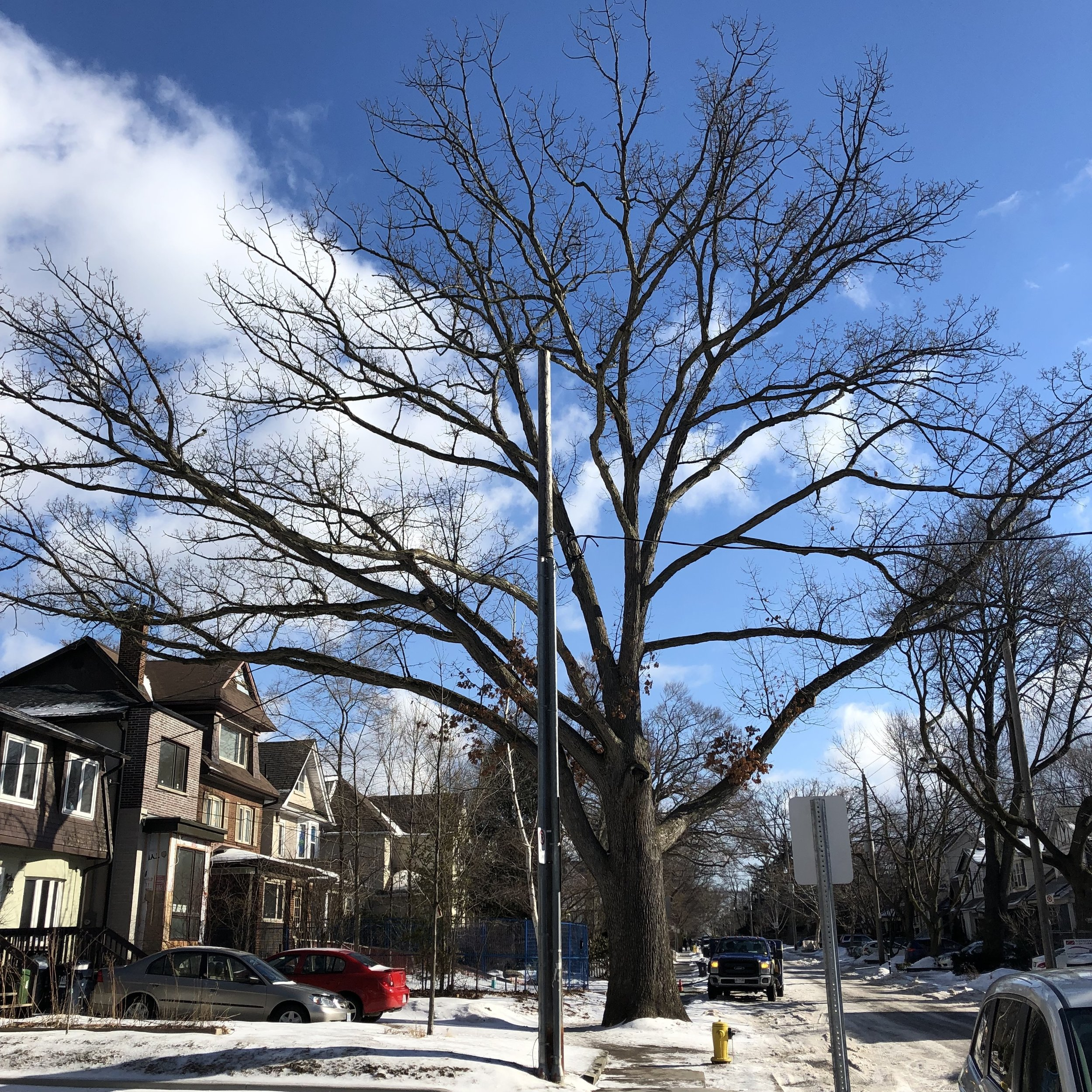 Photo: Davisville Post, February 2019