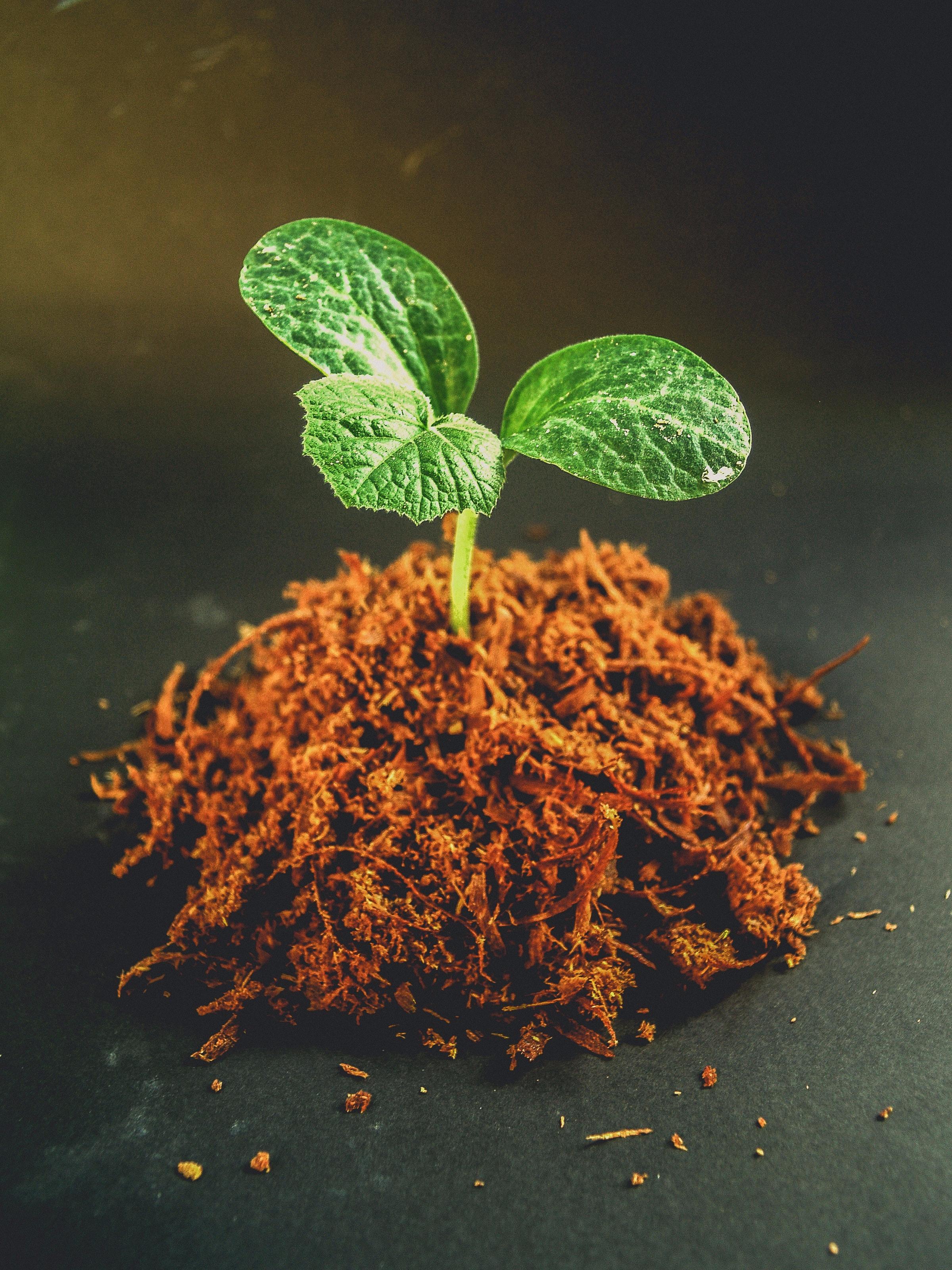 dirt-gardening-green-1214394.jpg