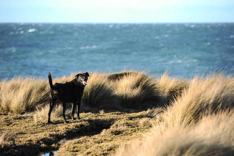 Lulworth, on the coast of North East Tasmania