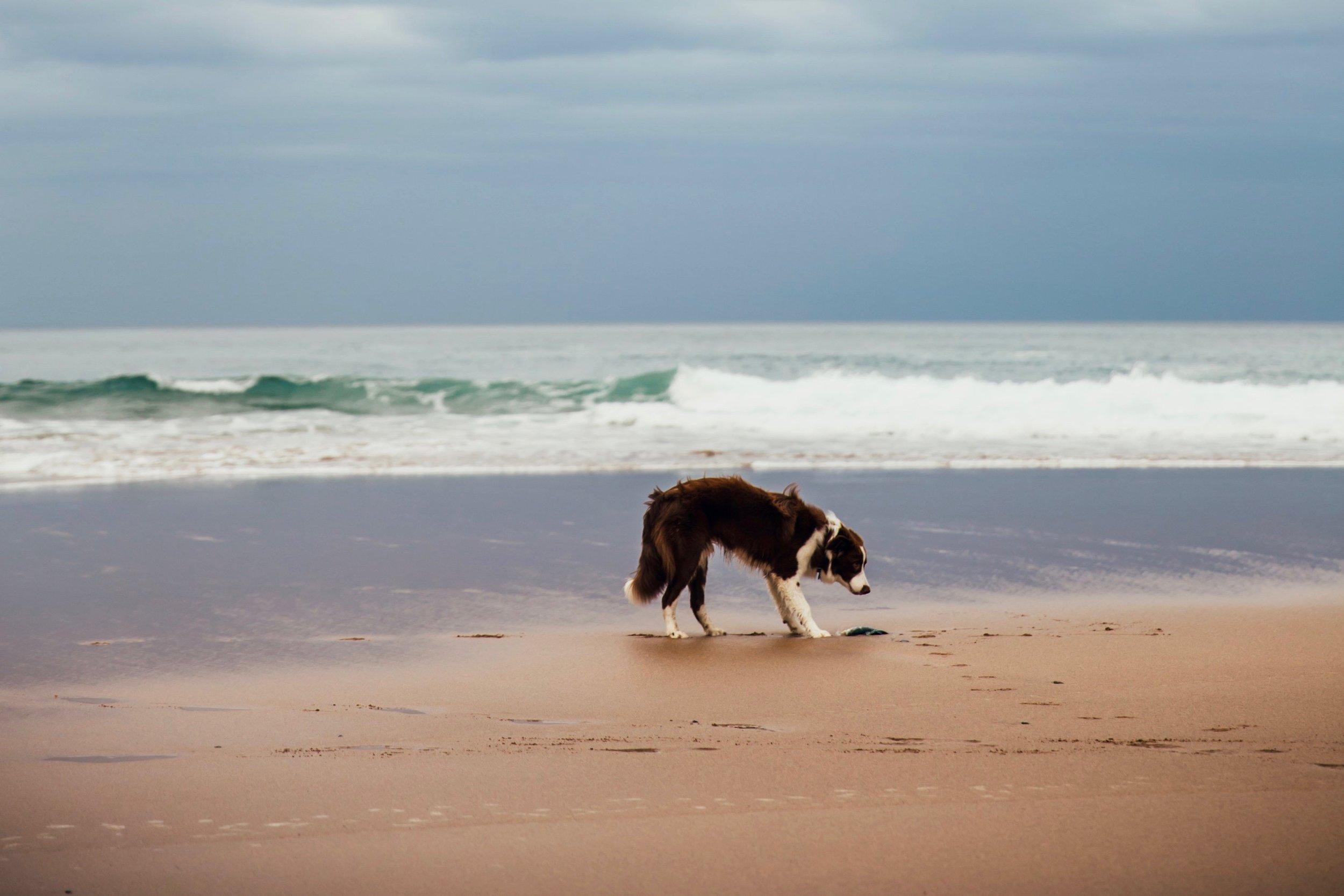 puppy-at-the-beach_4460x4460 2.jpg