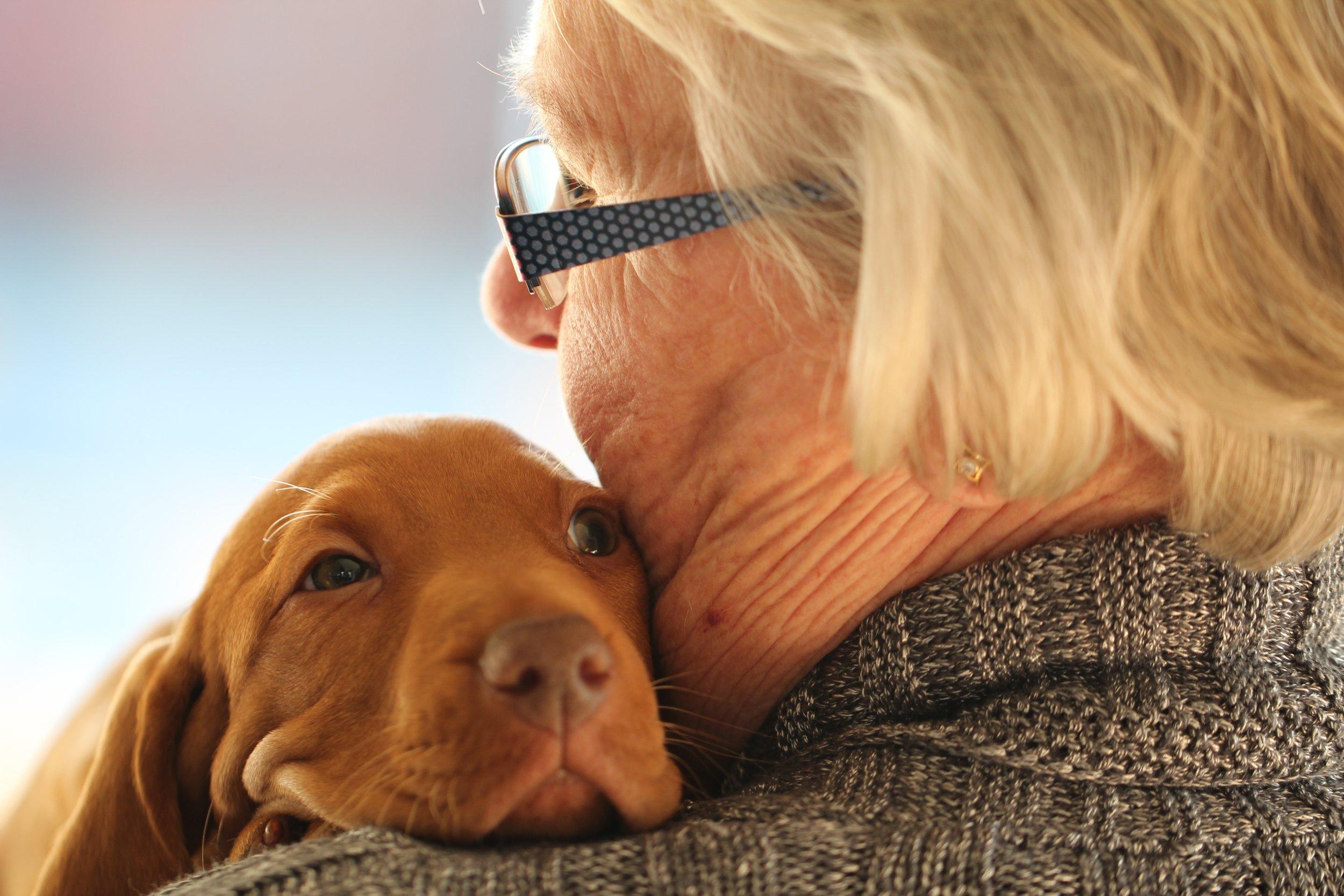 woman-old-puppy-dog-cute-love-1176463-pxhere.com.jpg