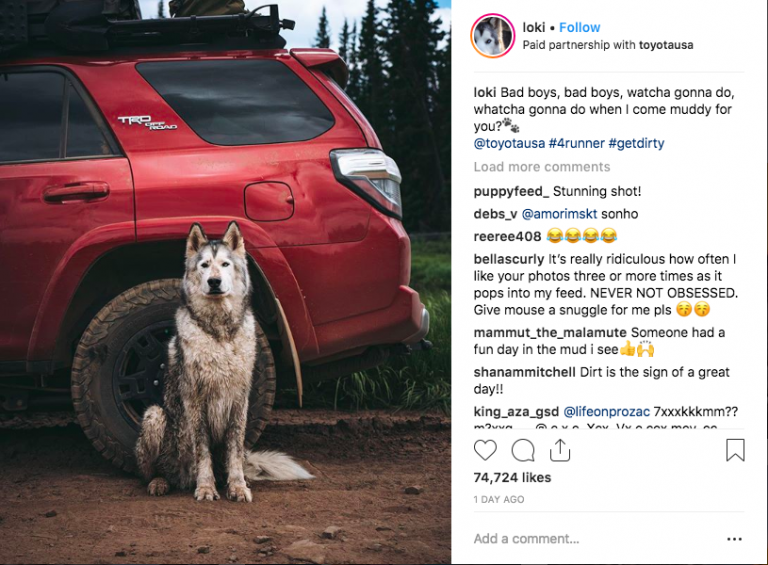Loki the Wolfdog in a sponsored Instagram post for Toyota USA.    Source