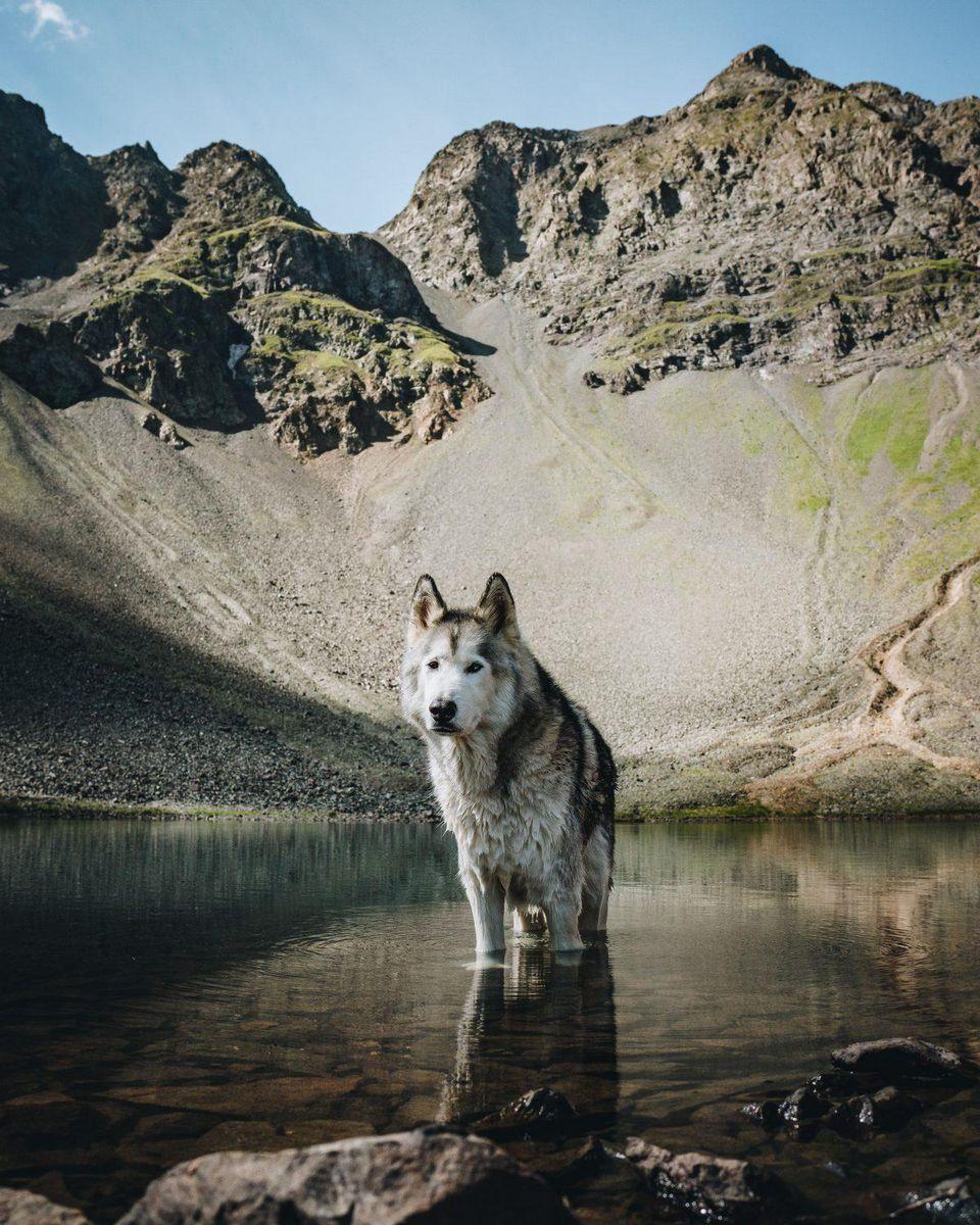 Loki The Wolfdog, KELLY LUND