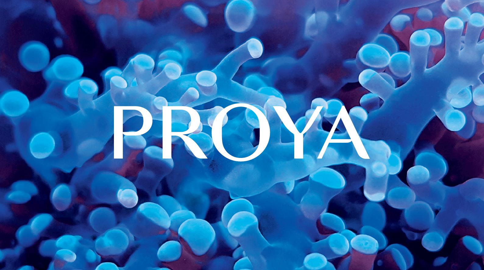 proya_00-5.jpg
