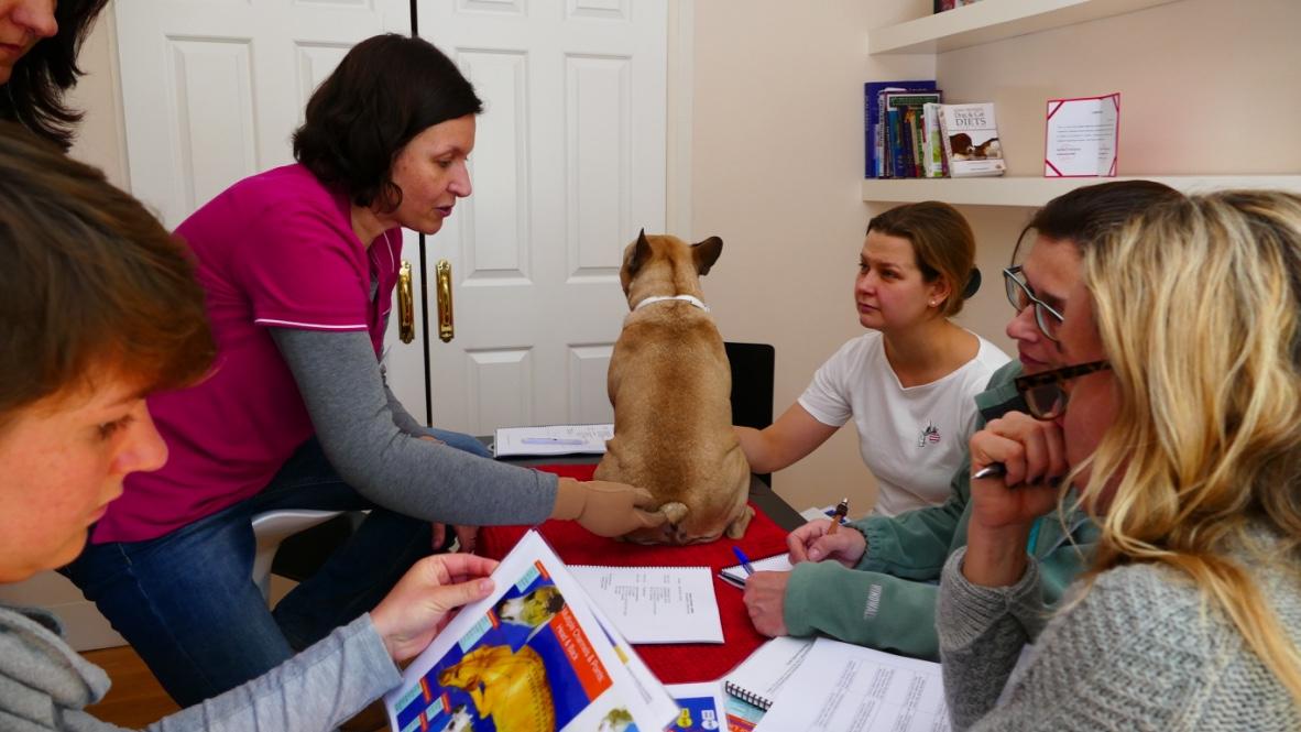 Los alumnos del Curso de Acupuntura en Pequeños Animales empiezan a practicar acupuntura en perros desde la primera sesión presencial.