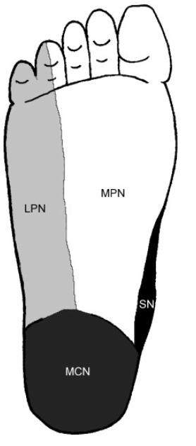 Figure 2 . Plantar distribution of the tibial nerve (Ali Alshami, 2008).png