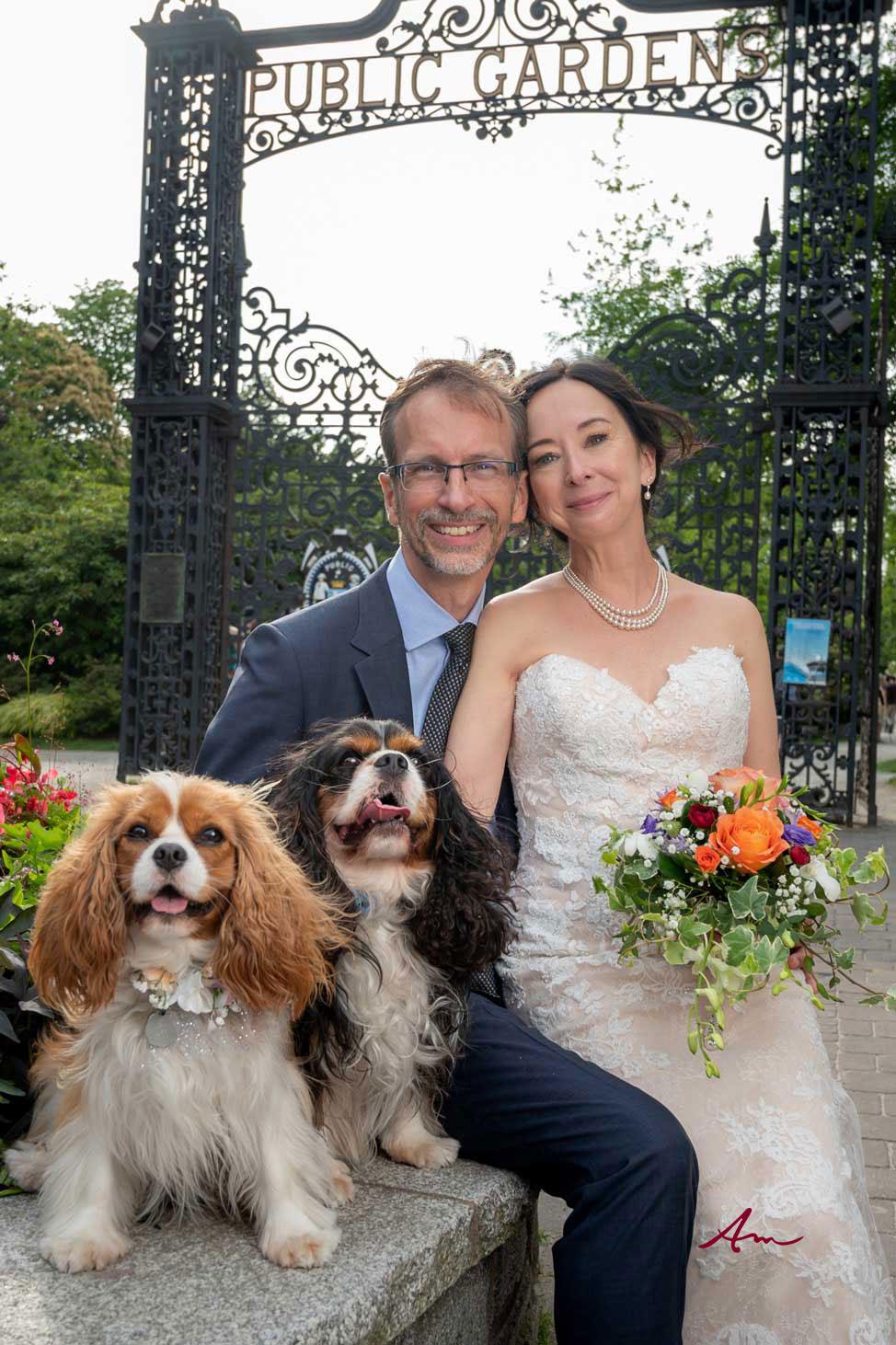 Wedding dogs.