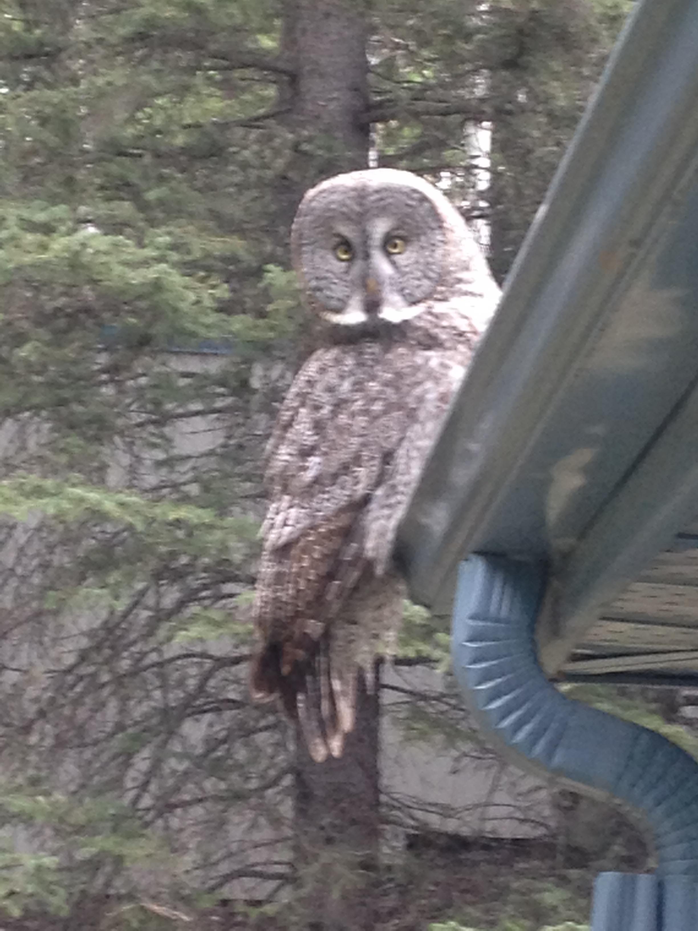 Owl 2.jpg