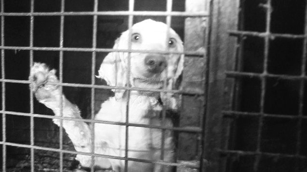 Puppy mill (photo: Panorama, BBC)
